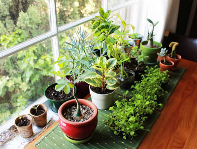 Tips to keep your plant resolutions